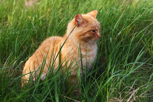 빨간 고양이가 풀밭에 앉아있다.