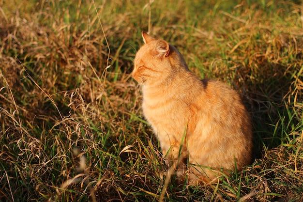 빨간 고양이는 태양에 앉아있다
