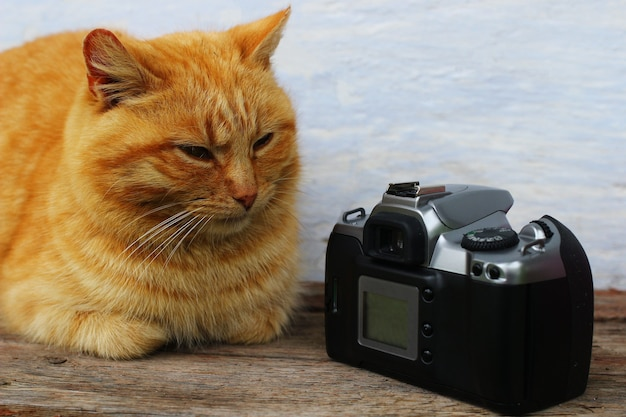 빨간 고양이가 카메라 근처에 앉아있다.