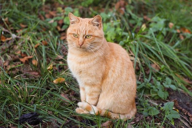 빨간 고양이가 앉아있다