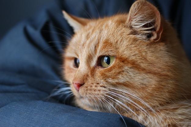 창문 클로즈업에서 보이는 빨간 고양이