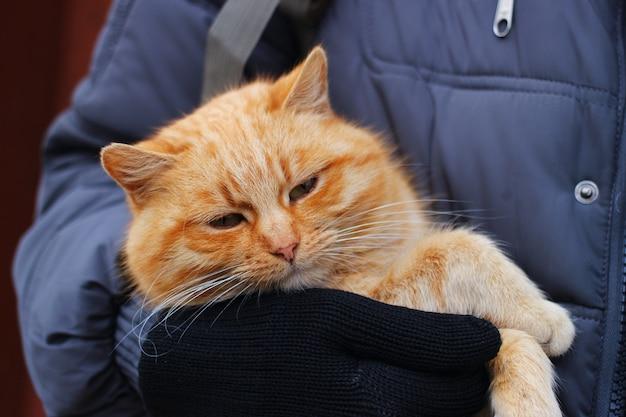 그의 손에 빨간 고양이