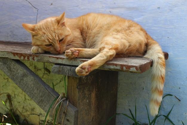 벤치에 쉬고 빨간 고양이