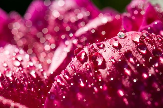 牡丹の赤い花びら