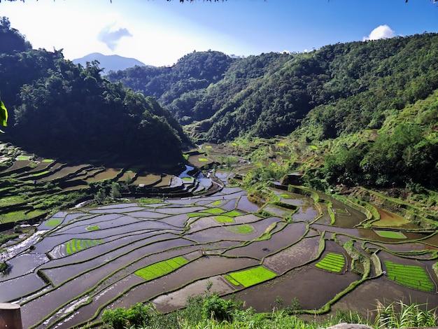 필리핀 방안의 계단식 논