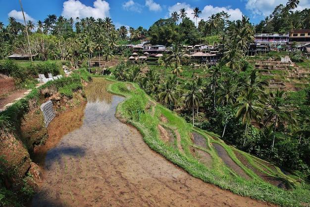 インドネシア、バリ島の棚田