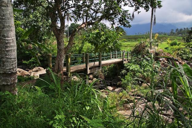 Рисовые террасы на бали, индонезия