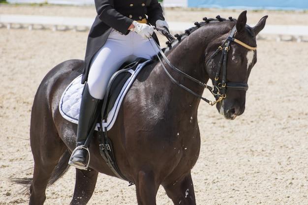 Всадник в черно-белом костюме выполняет задание на конных соревнованиях по выездке на красивой гнедой лошади, одетой в амуницию.