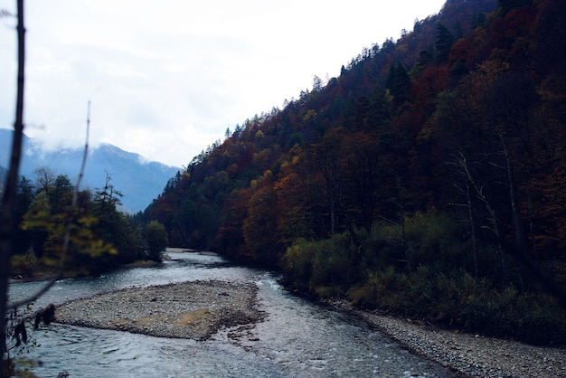 가을 숲의 강