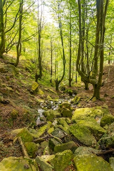 Река в буковом лесу на пути к горе адарра в городе урниета недалеко от сан-себастьяна, гипускоа