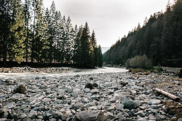 石のある川が森の間を流れて山に流れ込む