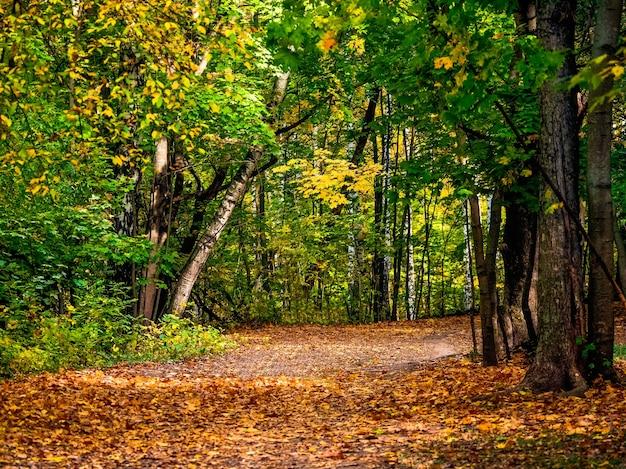 秋の森の道はカエデの葉で覆われています。秋の風景。