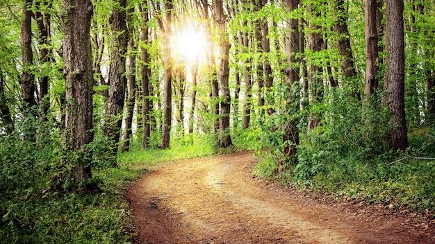 夕日に照らされた春の森の道