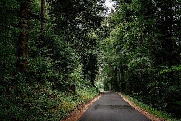 여름이나 봄 숲의 길. 자동차와 휴가 여행의 개념과 아이디어