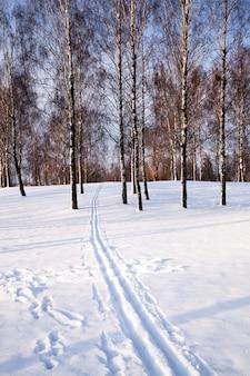 渡されたそりから形成された森の中の道