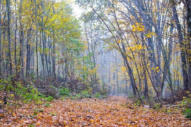 秋の森の中、道は乾燥した葉で覆われています_