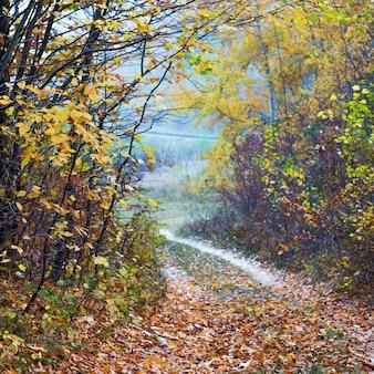 道は秋の森のはずれにあります