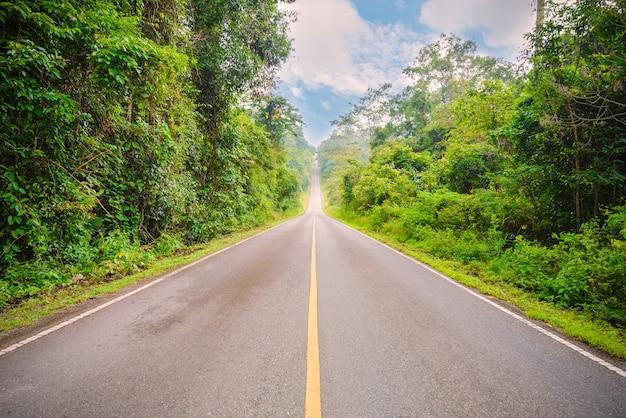 Дорога асфальтированная, уходит. по обе стороны от зеленых деревьев Premium Фотографии
