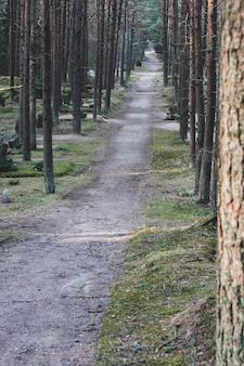 背の高い木が植えられた墓地を通る道