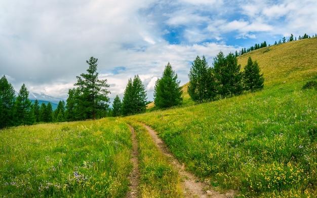 Дорога через луг. атмосферный зеленый лесной пейзаж. минималистичный панорамный пейзаж с опушкой хвойного леса и скал в легком тумане. горный альпийский лесной массив.