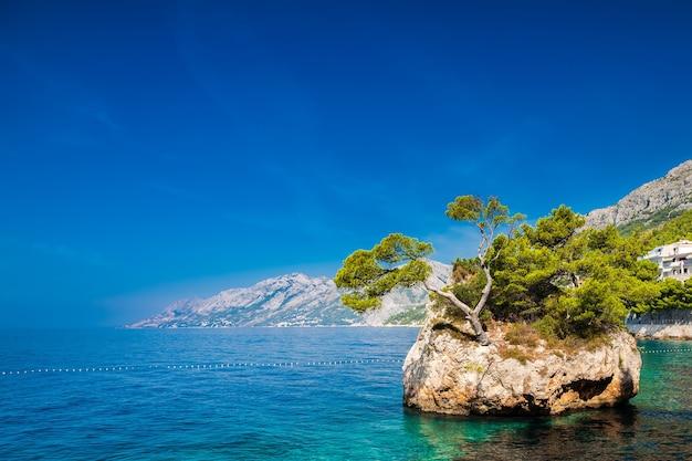 Brela, makarska riviera, croatia의 punta rata 해변 근처에서 자라는 소나무가있는 바위