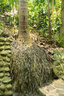 Корни пальмы в национальном парке острова маврикий