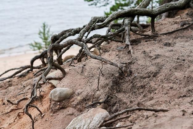 石の間の土の表面にある木の根