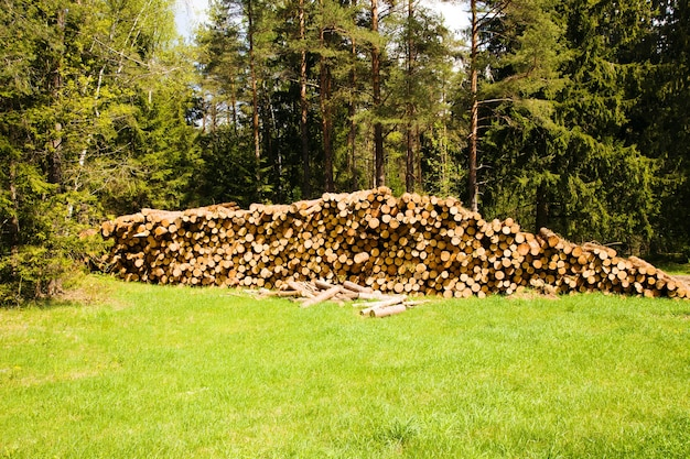 丸太に使われる伐採された木