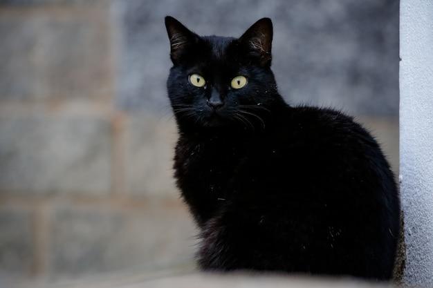 Чешуйчатая кошка имеет черно-оранжевую шерсть, поэтому ее также называют кошкой-черепахой.