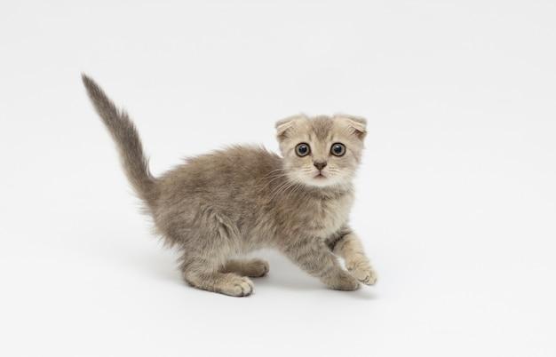 Испуганный котенок на белом фоне