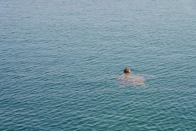 바다 거북은 열대 바닷물에서 수영합니다.