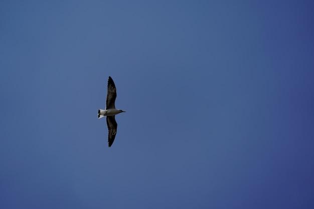 タイの国のビーチとマングローブの森のカモメの鳥。