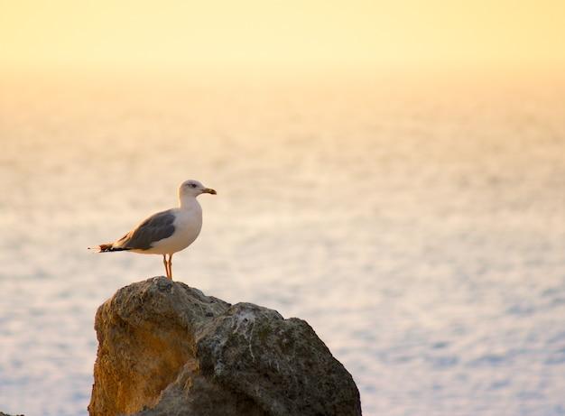 海を背景に夕日のビームのカモメ
