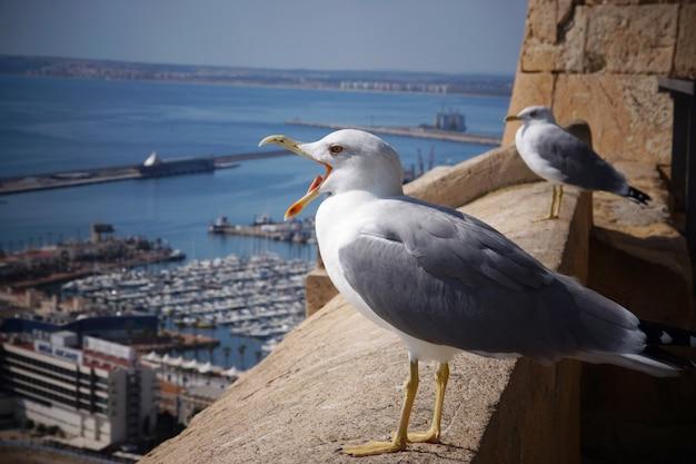 Чайка кричит на краю крепости у морского города.