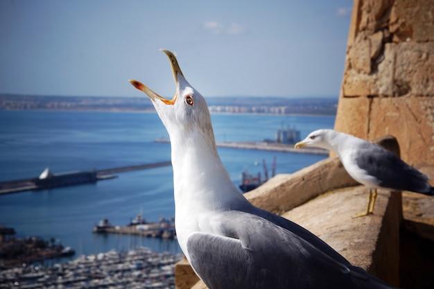 Чайка кричит, положив голову на край крепости недалеко от морского города.