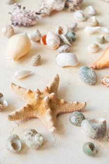 베이지색 모래 배경에 조개입니다. 수직 프레임