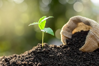 The seedling are growing from the rich soil to the morning sunlight that is shining