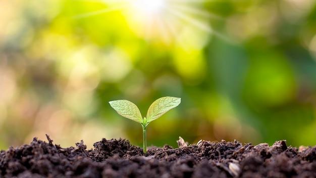 苗木は肥沃な土壌と輝く朝日、環境と生態学的概念から成長しています。