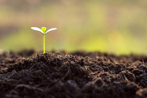 묘목은 비옥한 토양, 환경 개념에서 자라고 있습니다.