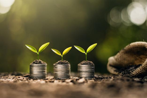 Саженцы растут на монетах, размещенных на земле, думая о финансовом росте.