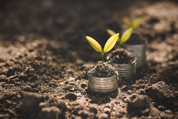 묘목은 재정적 성장에 대해 생각하면서 동전에서 자라고 있습니다.