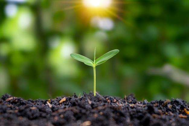 Саженцы выращены из плодородной почвы, и утреннее солнце светит растениям.