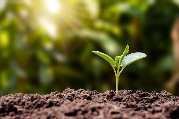 묘목은 비옥한 토양에서 자라고 아침 햇살이 비춥니다. 생태와 생태 균형 개념입니다.