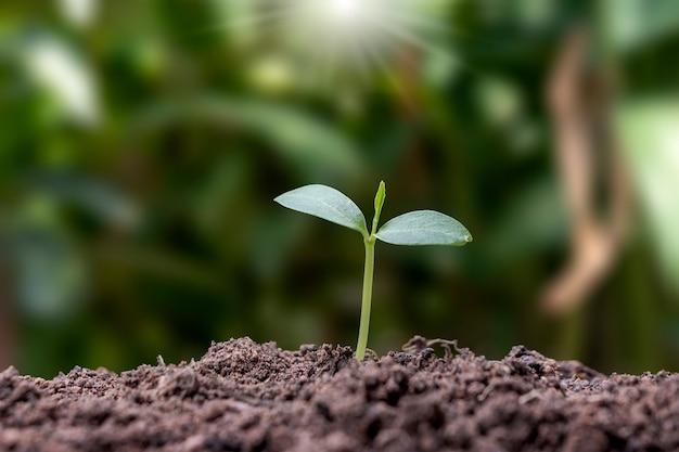 Саженцы вырастают из плодородной почвы и светит утреннее солнце. концепция экологии и экологического баланса.