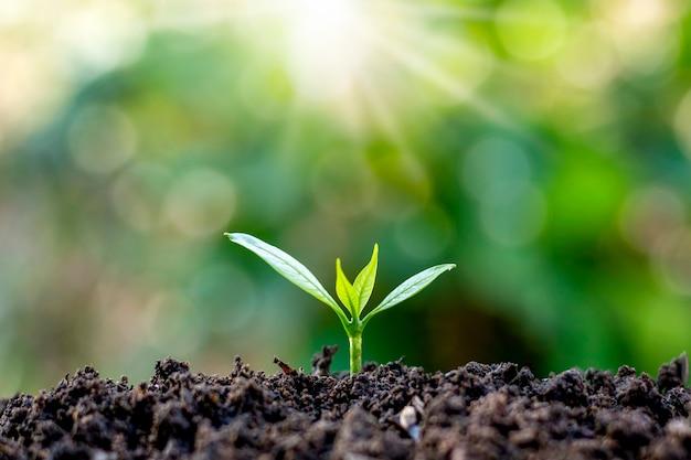 肥沃な土壌から苗木が育ち、朝日が差し込む