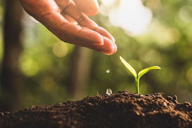 苗木は繁栄していて、男の手が苗木に水をやっていました。