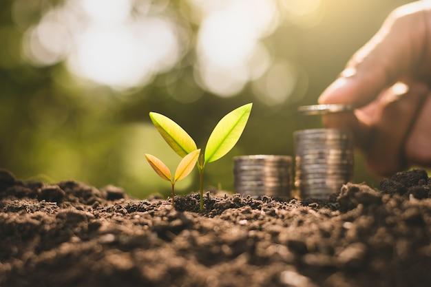 苗木は土から繁栄し、男の手は彼の後ろにコインを積み上げていました。これは経済成長の概念です。