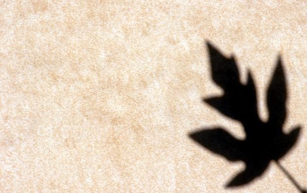 Тень листа папайи, изолированные на фоне стены