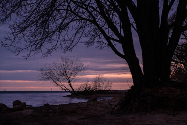 Lakhta sankt petersburg에서 일몰에 겨울에 핀란드 만 해안