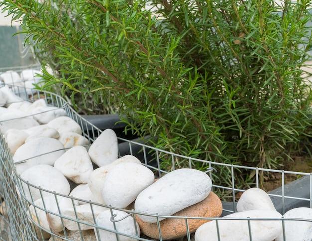 관목은 금속 격자에 둥근 돌로 장식되어 있습니다. 정원 장식